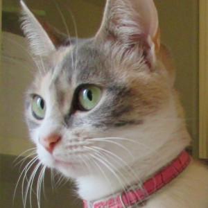 Hypatia Roman cat Auteur