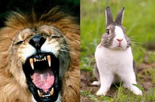 leone coniglio