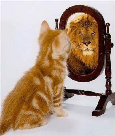 superbia gatto leone