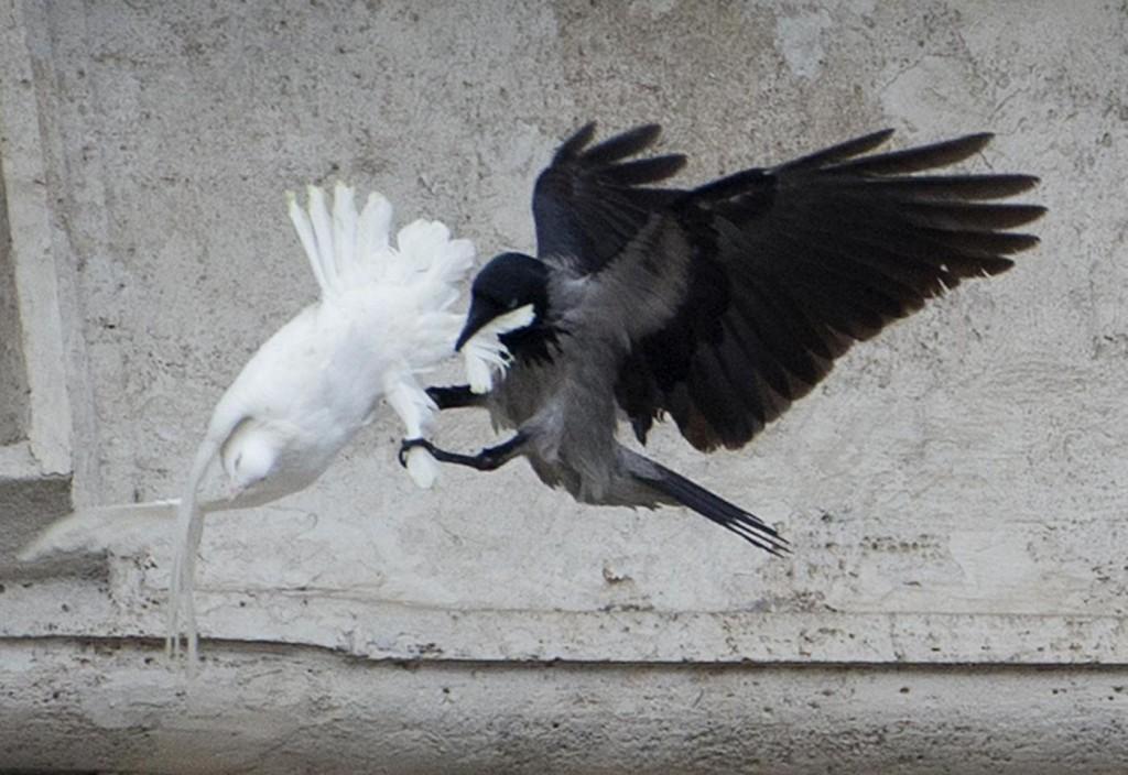 colomba e corvo angelus